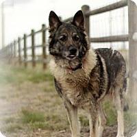 Adopt A Pet :: Stormie - Cheyenne, WY