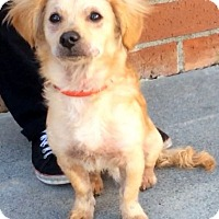 Adopt A Pet :: ERNEST (video) - Los Angeles, CA