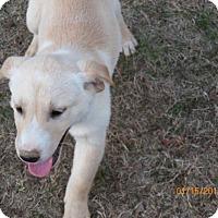 Adopt A Pet :: Sunday - Boston, MA