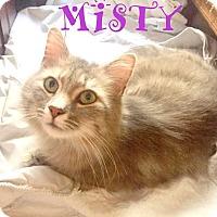 Domestic Mediumhair Cat for adoption in Mooresville, North Carolina - MISTY