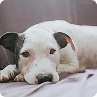 Adopt A Pet :: Nicole - Boston, MA