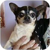 Adopt A Pet :: Wiggles - Staunton, VA