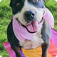 Adopt A Pet :: Hanessa LOVES to swim - Sacramento, CA
