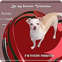 Adopt A Pet :: Honey 6 pounds - Sacramento, CA