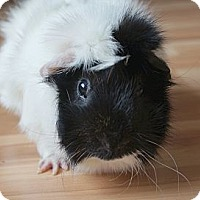 Adopt A Pet :: Monte - Brooklyn Park, MN