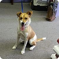 Adopt A Pet :: Mia Tassy - Conroe, TX
