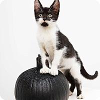 Adopt A Pet :: Frank Sinatra - New York, NY