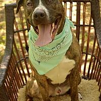 Adopt A Pet :: Lou Lou - Auburn, CA
