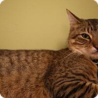 Adopt A Pet :: Copper - The Colony, TX