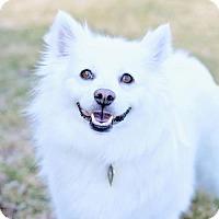 Adopt A Pet :: Lalita - Salt Lake City, UT