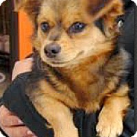 Adopt A Pet :: Arri-ADOPTION PENDING - Boulder, CO