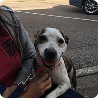 Adopt A Pet :: Lola ~adopted! - Glastonbury, CT