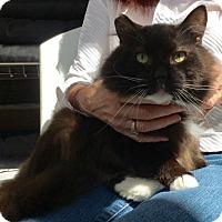Adopt A Pet :: Chappie - Pasadena, CA