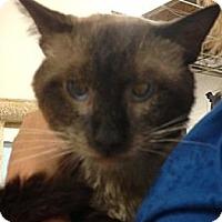 Adopt A Pet :: Smokey - Monroe, GA