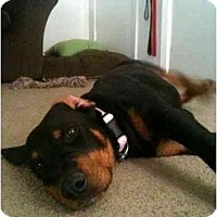 Adopt A Pet :: Hope - Arlington, TX