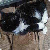 Adopt A Pet :: Lori - Troy, OH
