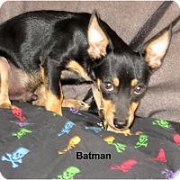 Adopt A Pet :: Batman - Tucson, AZ