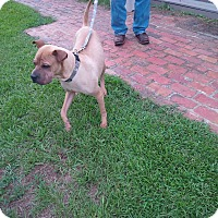 Adopt A Pet :: Toby in GA - pending - Mira Loma, CA