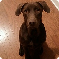 Adopt A Pet :: Rufus - Marietta, GA