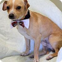 Adopt A Pet :: Kix - Dalton, GA