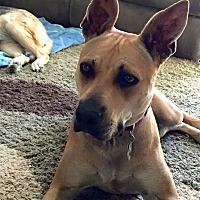 Adopt A Pet :: Nina - Long Beach, CA