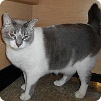 Adopt A Pet :: Bunnie - Chattanooga, TN