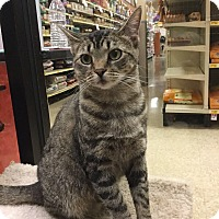 Adopt A Pet :: Lizzy Beth - Pending! - Colmar, PA