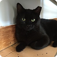 Adopt A Pet :: Princess Licorice - Portland, ME