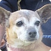 Chihuahua/Dachshund Mix Dog for adoption in Germantown, Maryland - Ethel
