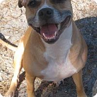 Adopt A Pet :: Baby Regan - Voorhees, NJ