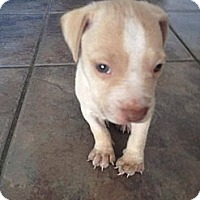 Adopt A Pet :: June-Bug - Orlando, FL
