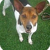 Adopt A Pet :: Ash - Jacksonville, FL