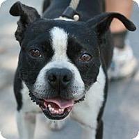 Adopt A Pet :: Bobby - Canoga Park, CA