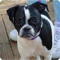 Adopt A Pet :: Zorro - Plainfield, CT