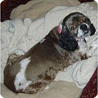 Adopt A Pet :: Mary Poppins - Sugarland, TX