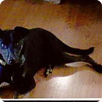 Terrier (Unknown Type, Medium) Mix Dog for adoption in Brattleboro, Vermont - Curby