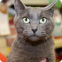 Adopt A Pet :: Kindred - Irvine, CA