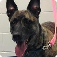 Adopt A Pet :: Pinky - Rochester/Buffalo, NY