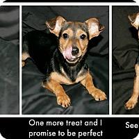 Adopt A Pet :: Jiggs - Lufkin, TX
