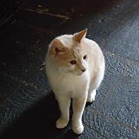 Adopt A Pet :: Sunny - Central Islip, NY
