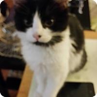Adopt A Pet :: Delphinia - North Highlands, CA