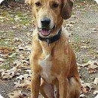 Adopt A Pet :: KONA - Hampton, VA