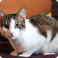 Adopt A Pet :: Crockette - Putnam, CT