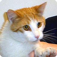 Adopt A Pet :: Newt - Wildomar, CA