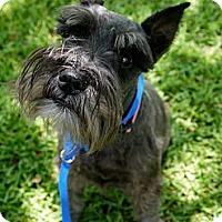 Adopt A Pet :: Greta - Baton Rouge, LA