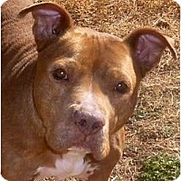 Adopt A Pet :: 'Wrigley