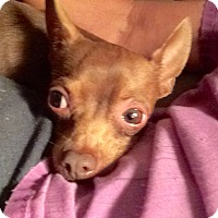 Adopt A Pet :: Twix - Edmond, OK