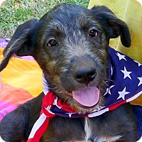 Adopt A Pet :: Sir Charles - Sacramento, CA