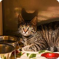 Adopt A Pet :: Apples - Athens, GA