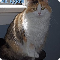 Adopt A Pet :: Ms. Kiddie - Covington, KY